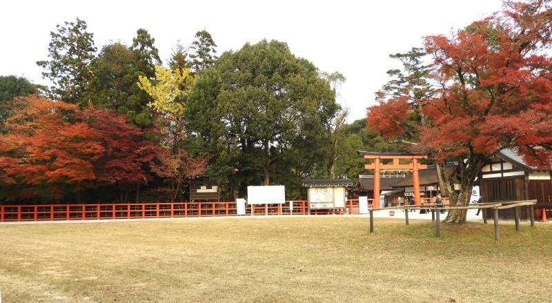 上賀茂神社 紅葉盛り_e0048413_21240328.jpg
