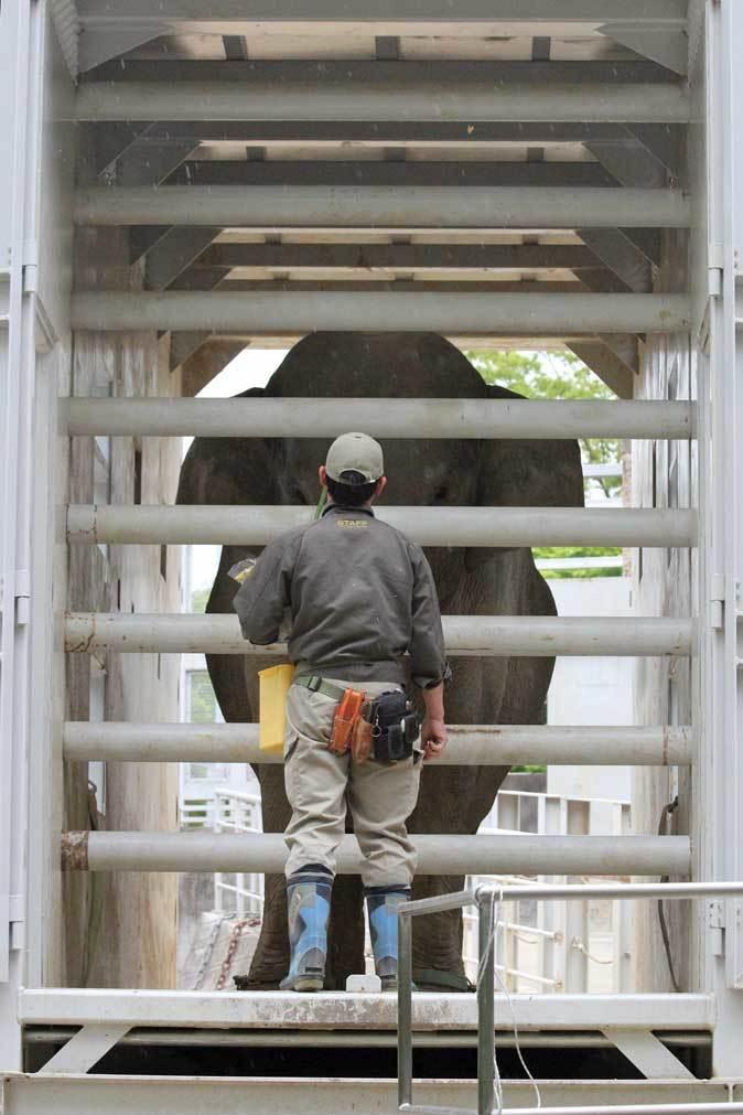 アジアゾウのトレーニング@輸送箱_b0355317_21445606.jpg