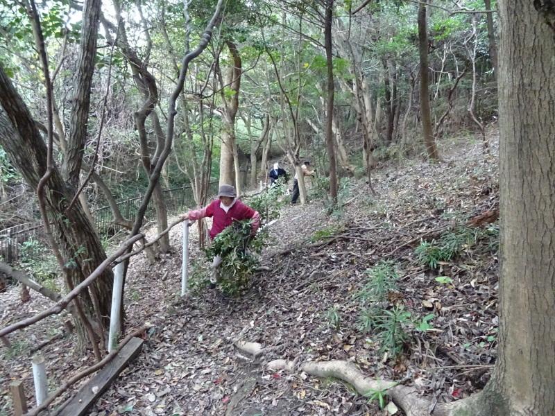 伐採木整理&リース材料採収・・・うみべの森_c0108460_17373428.jpg