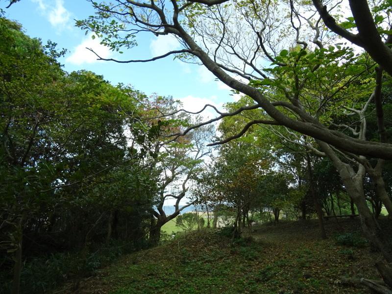 伐採木整理&リース材料採収・・・うみべの森_c0108460_17394123.jpg