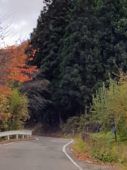 紅葉を望みながらりんご狩り♪_d0269832_08435086.jpeg