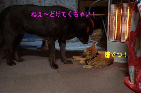 d0013645_10420113.jpg