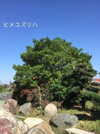 d0030761_20124637.jpeg