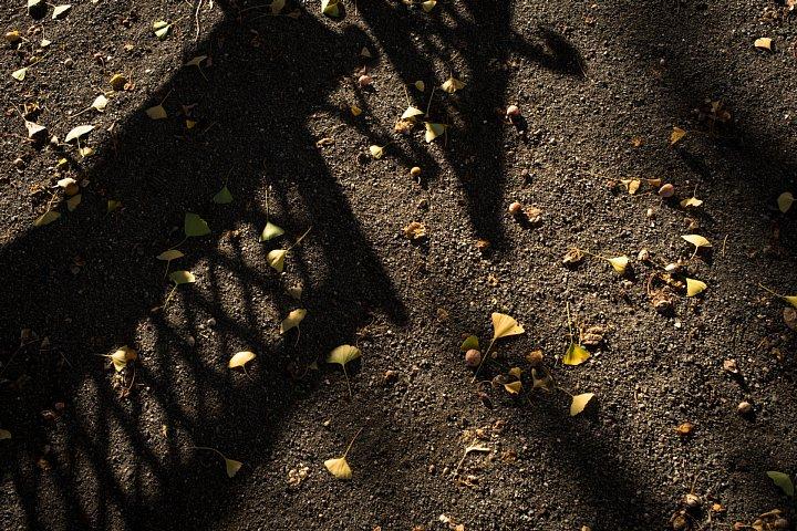 樹齢140年の大銀杏がある本校_d0353489_8435067.jpg