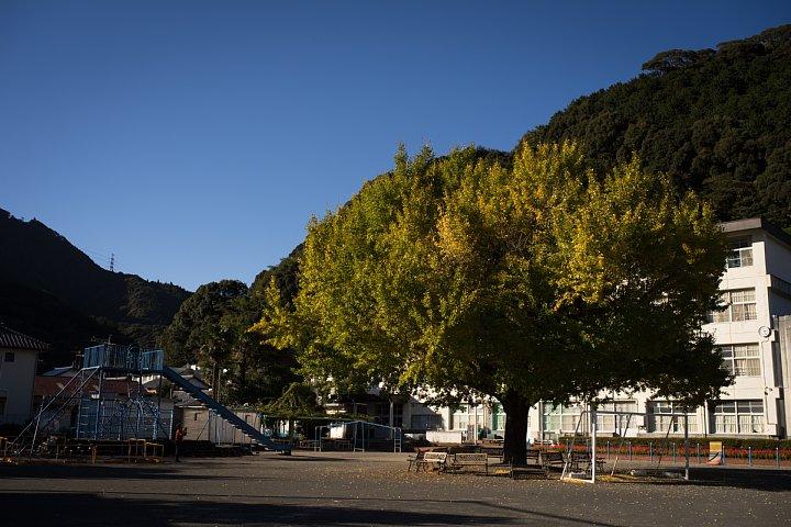 樹齢140年の大銀杏がある本校_d0353489_8471369.jpg