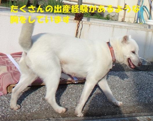 f0121712_16123456.jpg