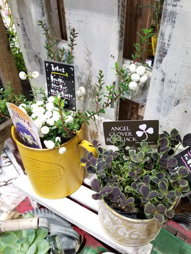 toujours jardin,fukiteiです。_f0237416_19414297.jpg