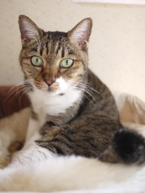 猫のお留守番 メイちゃん編。_a0143140_22165555.jpg