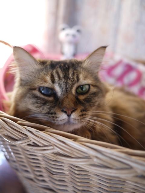 猫のお留守番 ポポちゃん編。_a0143140_22210776.jpg