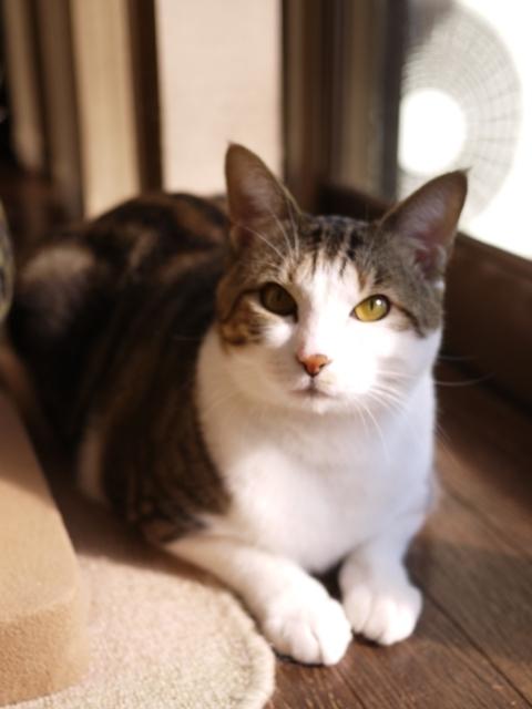 猫のお留守番 ラッキーくん編。_a0143140_22253589.jpg