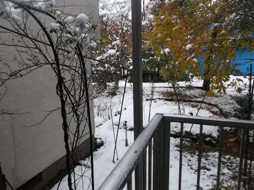 雪の朝&生たらことごぼうの炒め煮_f0019498_18111526.jpg