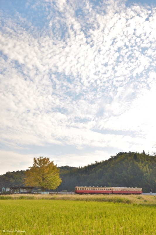 小さな駅と大きなイチョウの木_f0321522_08483567.jpg