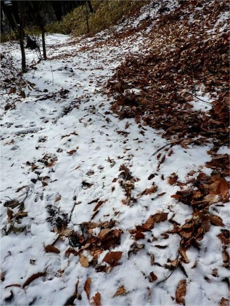 週末の天気と気温(11月4週目):路面凍結注意!!_b0174425_16141400.jpg