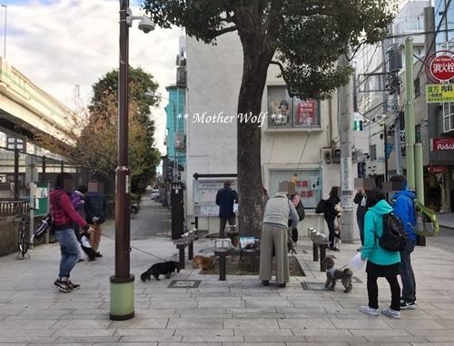 第23回マザーウルフ遠足 横浜レポート_e0191026_15575955.jpg