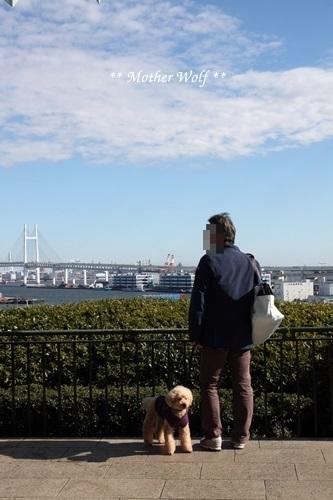第23回マザーウルフ遠足 横浜レポート_e0191026_19055149.jpg