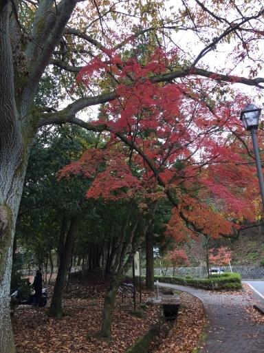 京都 宝ヶ池公園の紅葉_c0223630_14584510.jpg