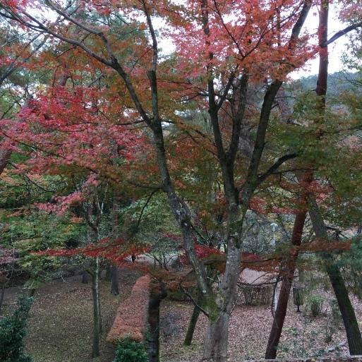 京都 宝ヶ池公園の紅葉_c0223630_15014201.jpg
