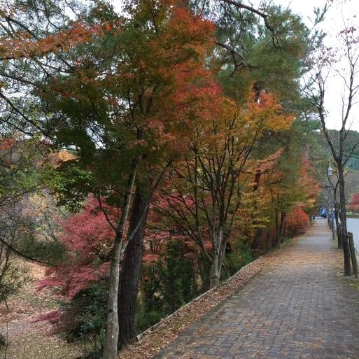 京都 宝ヶ池公園の紅葉_c0223630_15025262.jpg