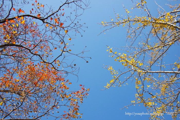 秋晴れの日_e0347431_23075133.jpg