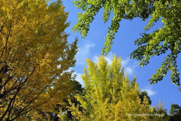 秋晴れの日_e0347431_23085957.jpg