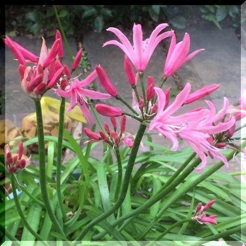 この時期に ピンクの・・・_e0054438_10495151.jpg