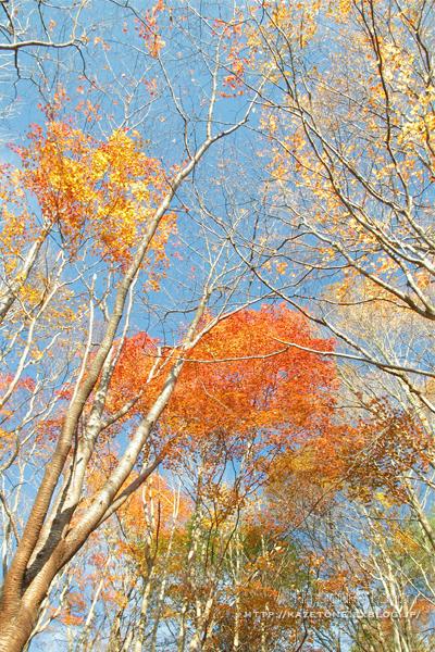 Autumn*memory②**白樺の先のブナ_b0197639_17285301.jpg