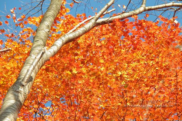 Autumn*memory②**白樺の先のブナ_b0197639_17385783.jpg