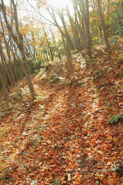 Autumn*memory②**白樺の先のブナ_b0197639_17450911.jpg