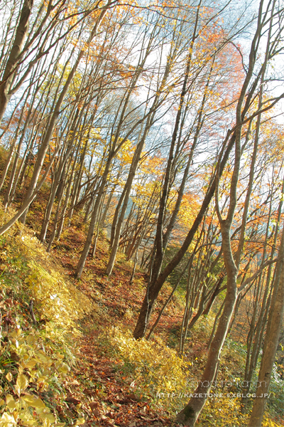 Autumn*memory②**白樺の先のブナ_b0197639_17453598.jpg