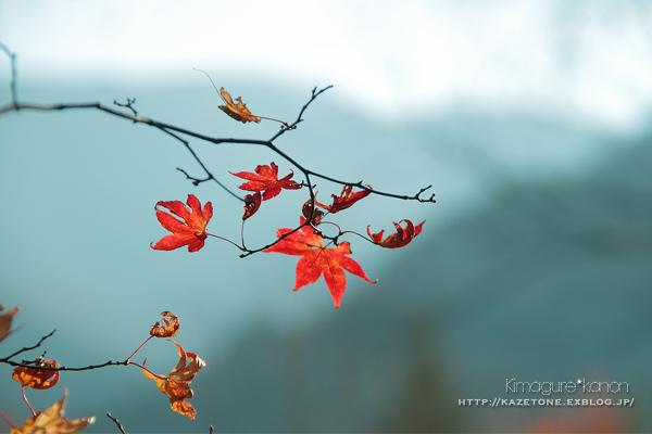Autumn*memory②**白樺の先のブナ_b0197639_17474844.jpg