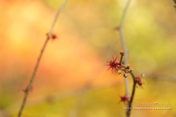 Autumn*memory②**白樺の先のブナ_b0197639_17531553.jpg