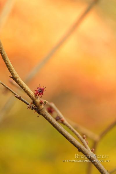 Autumn*memory②**白樺の先のブナ_b0197639_17535018.jpg