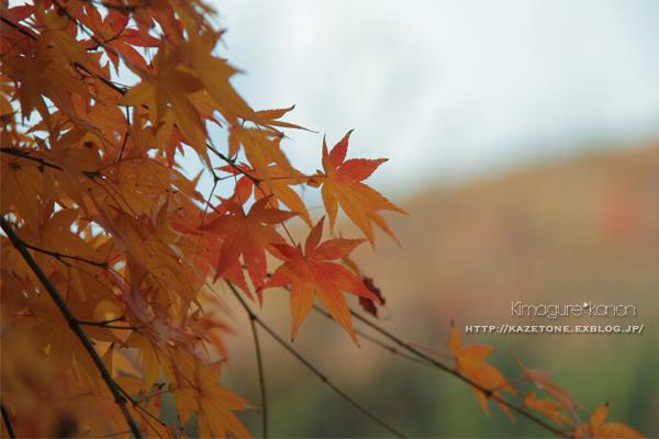 Autumn*memory②**白樺の先のブナ_b0197639_17582641.jpg