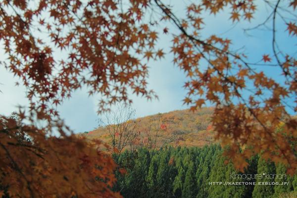 Autumn*memory②**白樺の先のブナ_b0197639_17590817.jpg