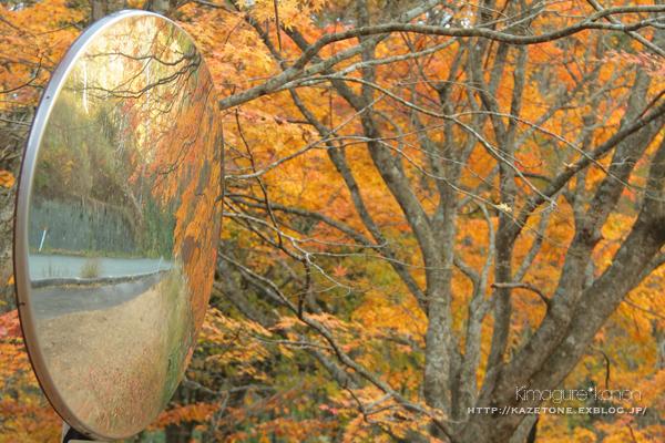 Autumn*memory②**白樺の先のブナ_b0197639_18002136.jpg