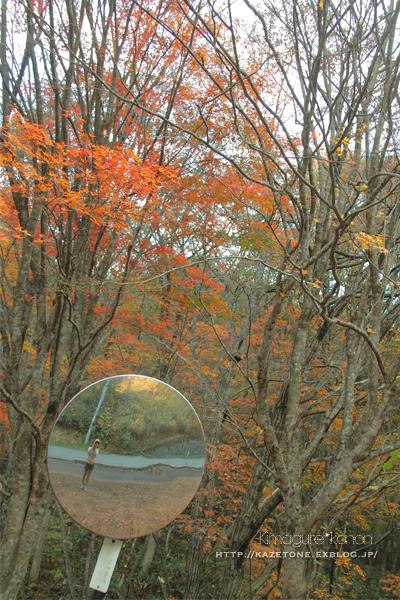 Autumn*memory②**白樺の先のブナ_b0197639_18010696.jpg