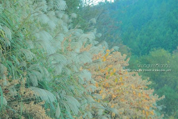 Autumn*memory②**白樺の先のブナ_b0197639_18011904.jpg