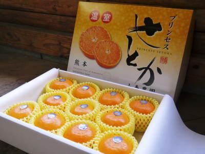 究極の柑橘「せとか」 寒さを感じさせ、冬の到来に向けハウスにビニールをはり、今年も順調に成長中!_a0254656_15182594.jpg