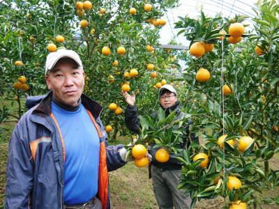 究極の柑橘「せとか」 寒さを感じさせ、冬の到来に向けハウスにビニールをはり、今年も順調に成長中!_a0254656_15300426.jpg