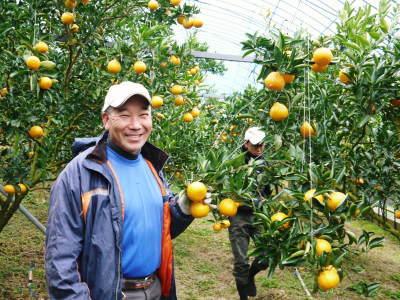 究極の柑橘「せとか」 寒さを感じさせ、冬の到来に向けハウスにビニールをはり、今年も順調に成長中!_a0254656_16231594.jpg