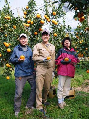 究極の柑橘「せとか」 寒さを感じさせ、冬の到来に向けハウスにビニールをはり、今年も順調に成長中!_a0254656_16501234.jpg