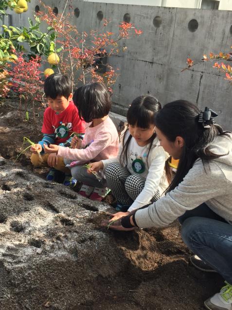 2017年度園庭の花や野菜4_f0324461_21271477.jpg
