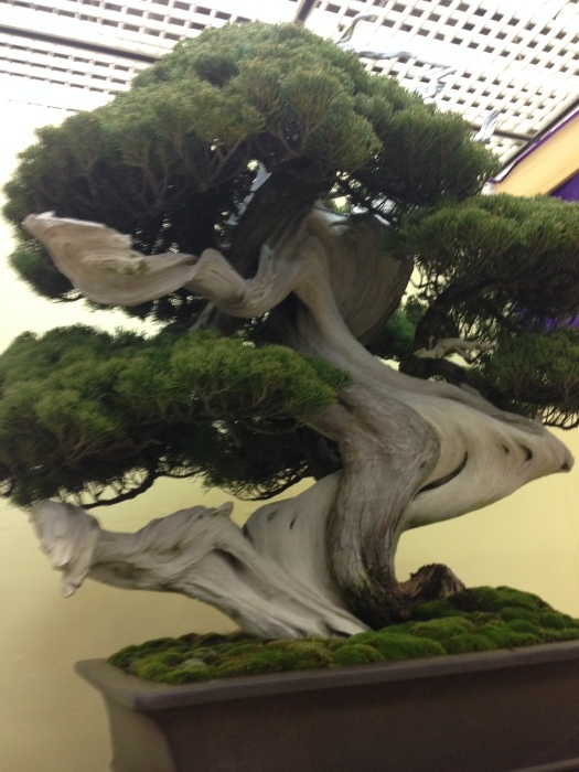 初めての大盆栽展_c0100195_11183561.jpg