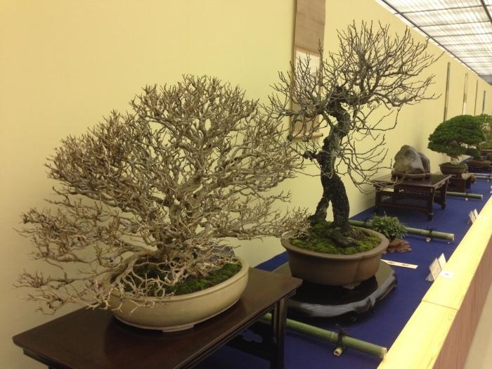 初めての大盆栽展_c0100195_11202854.jpg