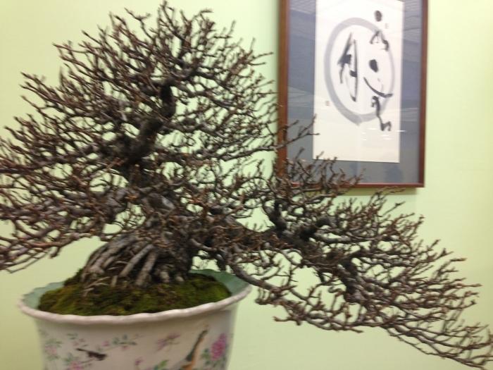 初めての大盆栽展_c0100195_11223078.jpg
