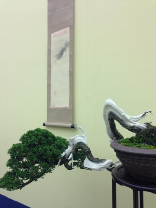 初めての大盆栽展_c0100195_11240006.jpg