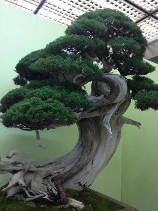 初めての大盆栽展_c0100195_11282016.jpg