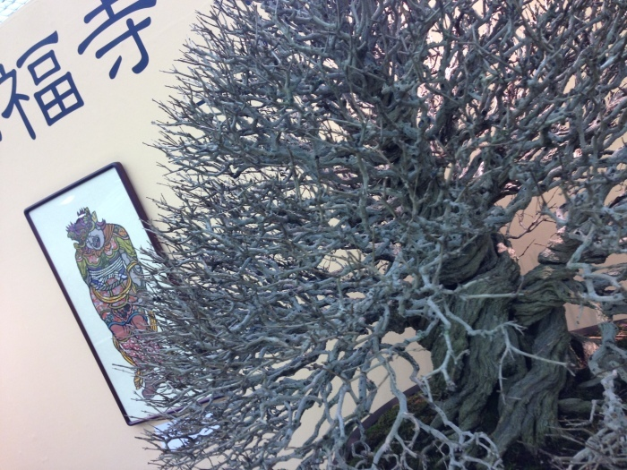 初めての大盆栽展_c0100195_11302096.jpg
