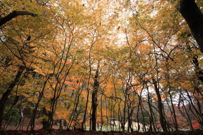瑞宝寺公園2017_b0043304_18160076.jpg