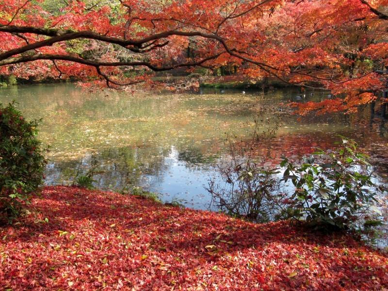 植物園 紅葉の盛り_e0048413_18445414.jpg